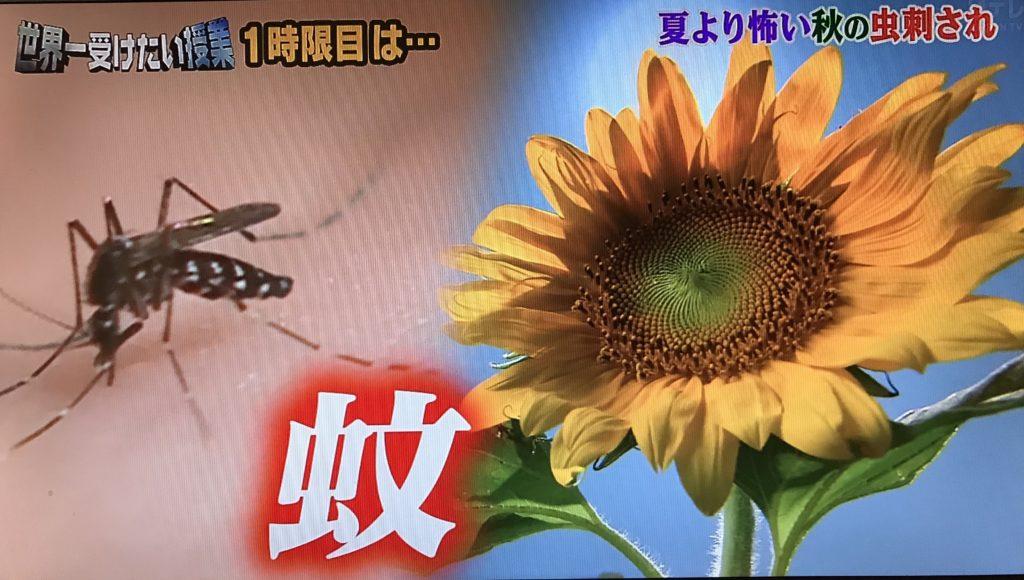 【世界一受けたい授業】秋の虫(蚊・ハチ・ノミ・クモ)の対策は?刺されない方法や刺された場合の対応まで!1