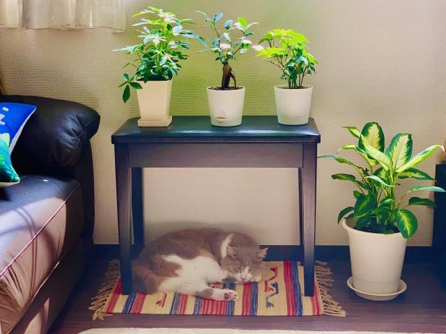 観葉植物_リビング